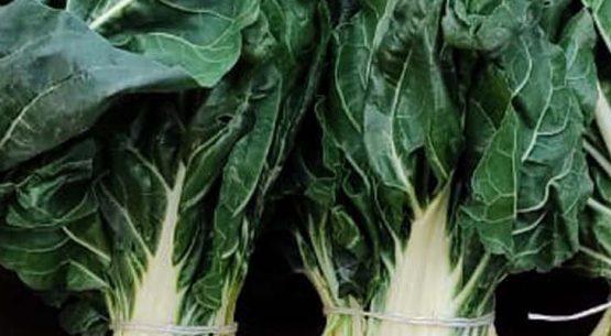 Boletín de hortalizas, octubre 2021